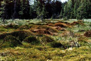 Blick übers Moor, Elfi Grünstäudl